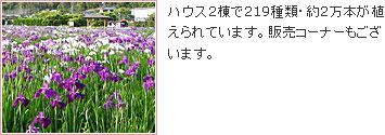 かわづ花菖蒲園