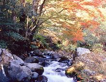 天城峠の紅葉【秋】